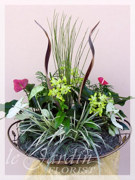 Orchid plant arrangements palm beach gardens 561 627 8118 for Garden arrangement of plants
